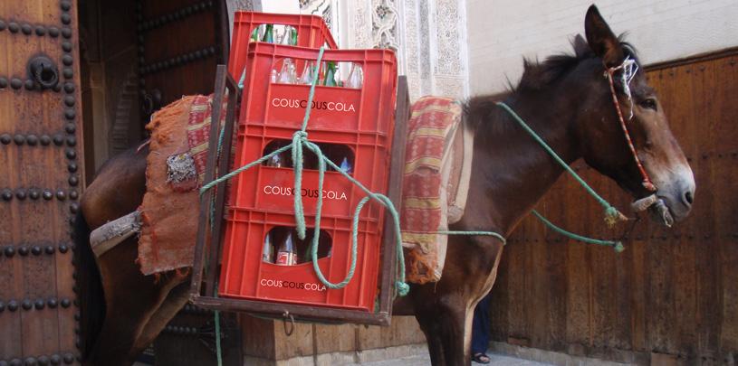 couscouscola horse